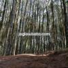 Tempat Wisata Hutan Pinus di Jogja yang Wajib Anda Kunjungi