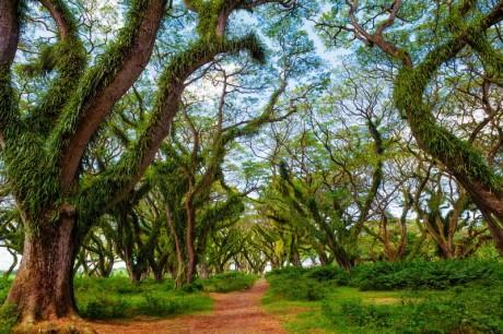 Berkunjung Ke Banyuwangi? Jangan Lewatkan Berkunjung Ke 18 Destinasi Wisata Di Banyuwangi Yang Menarik Ini