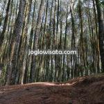 Hutang Pinus Mangunan