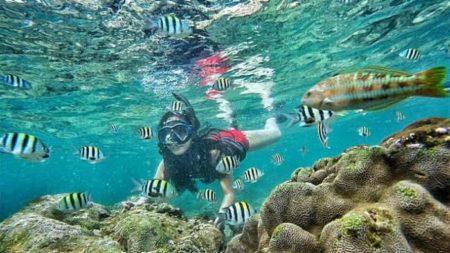 Snorkeling Pantai Nglambor Gunung Kidul Jogja