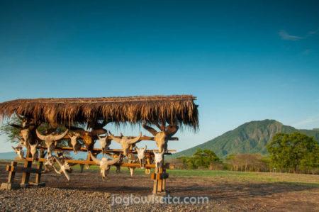 Banyuwangi - Taman Nasional Baluran