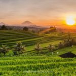Terasering, Bali