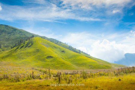 Padang Savana, Bromo