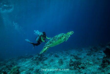 Diving di Bunaken, Sulawesi Utara