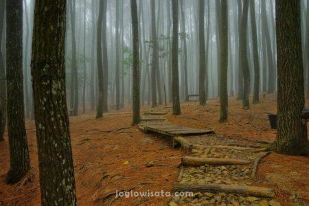 Hutan Pinus Mangunan, Bantul, Jogja