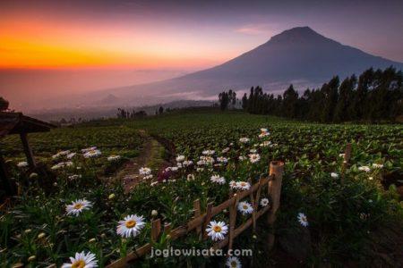 Posong Sunrise, Temanggung