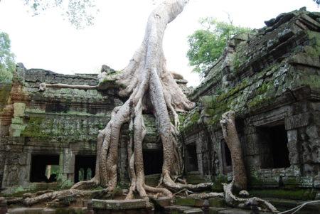 Ta Prohm Temple Kamboja