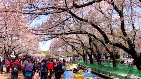 Ueno Park Jepang