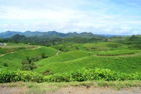 Makassar - Kebun Teh Malino